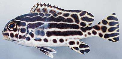 f:id:marinelifelog:20200429172955j:plain