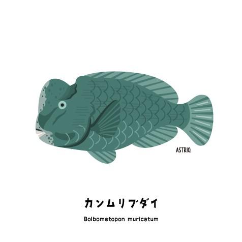 f:id:marinelifelog:20200801135231j:image