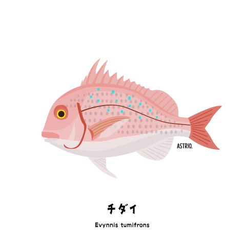 f:id:marinelifelog:20200925165452j:plain