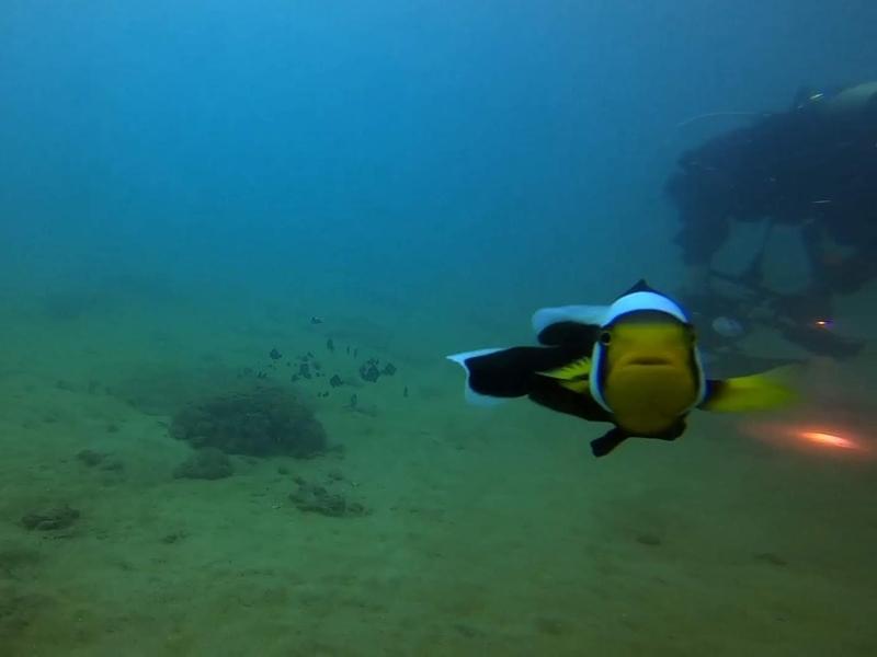f:id:marinelifelog:20201014165238j:plain