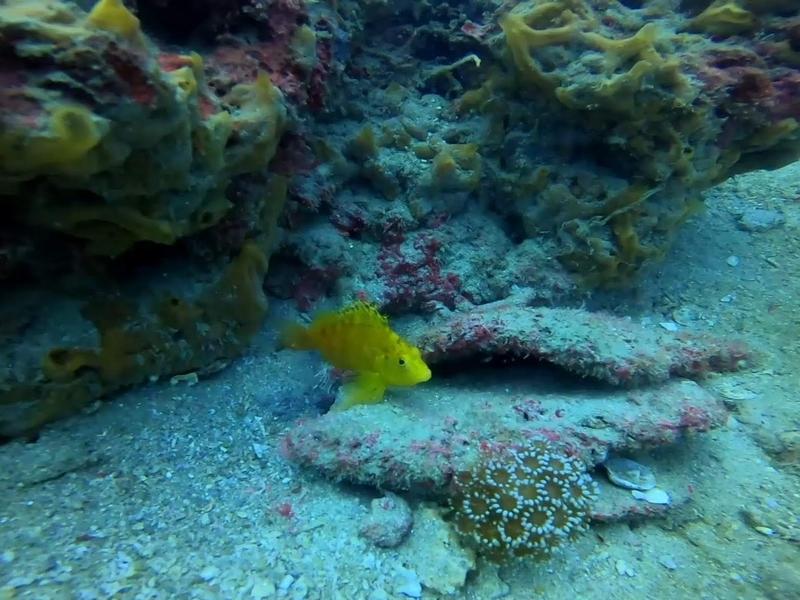 f:id:marinelifelog:20201014165242j:plain
