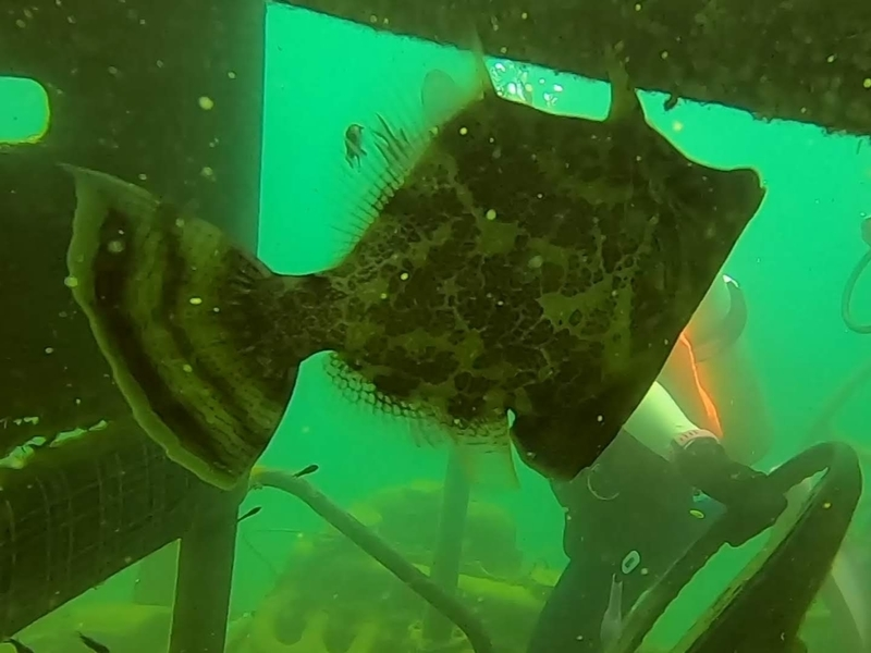 f:id:marinelifelog:20201014165246j:plain