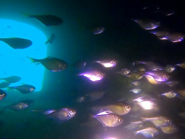 f:id:marinelifelog:20201014170144j:plain
