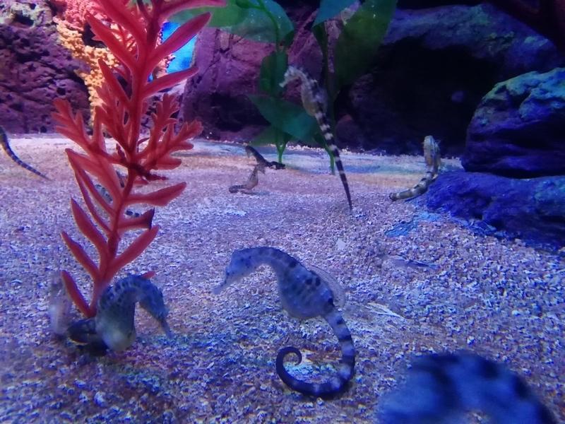 f:id:marinelifelog:20201026124132j:plain