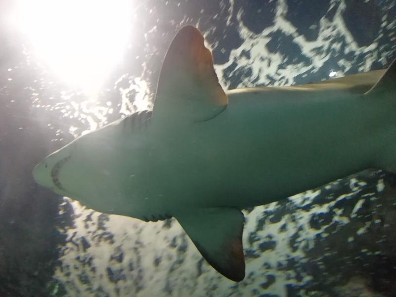 f:id:marinelifelog:20201026134959j:plain