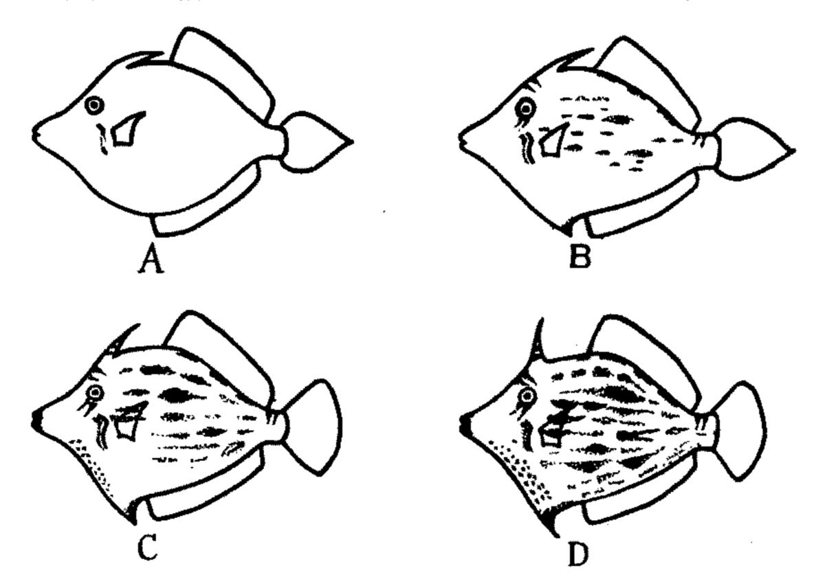 f:id:marinelifelog:20201203012519p:plain