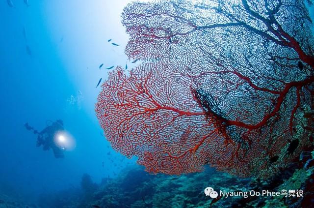 f:id:marinelifelog:20210419234136j:plain