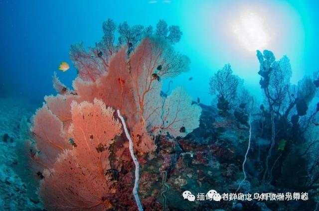 f:id:marinelifelog:20210419234414j:plain
