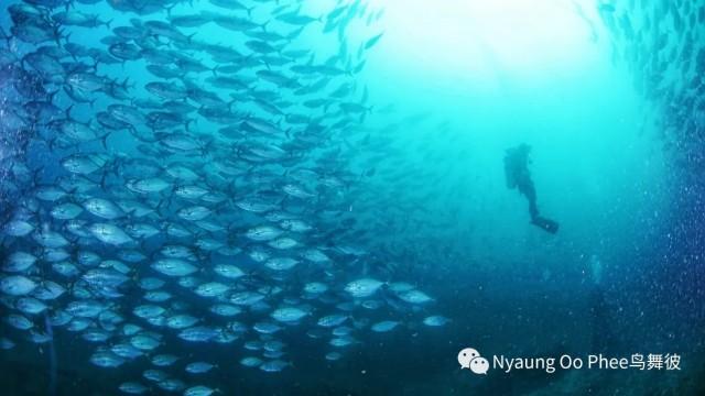 f:id:marinelifelog:20210419234646j:plain