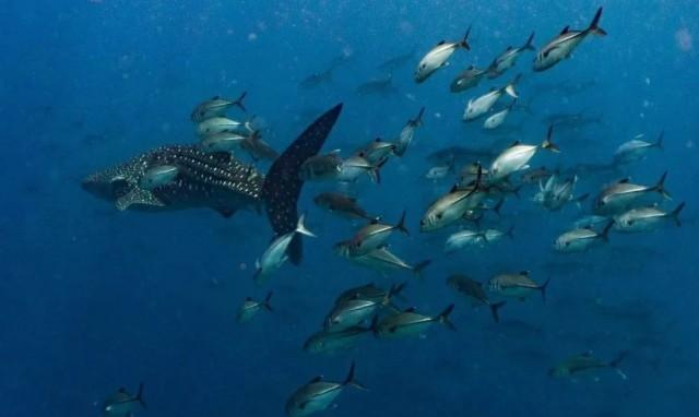 f:id:marinelifelog:20210419234703j:plain