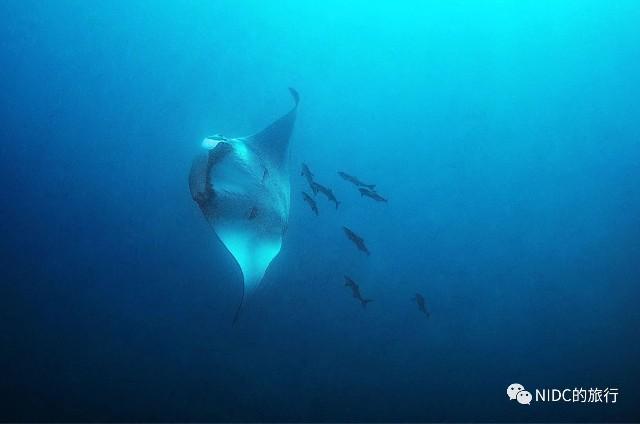 f:id:marinelifelog:20210419234734j:plain