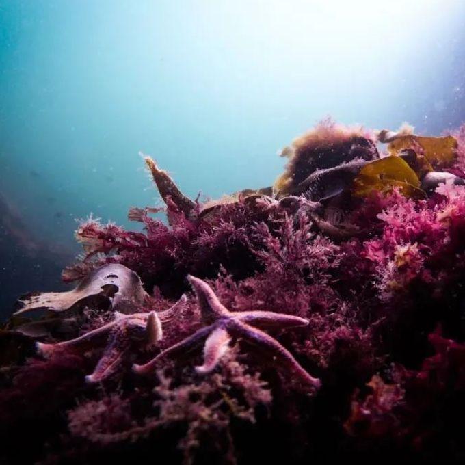 f:id:marinelifelog:20210703212538j:plain