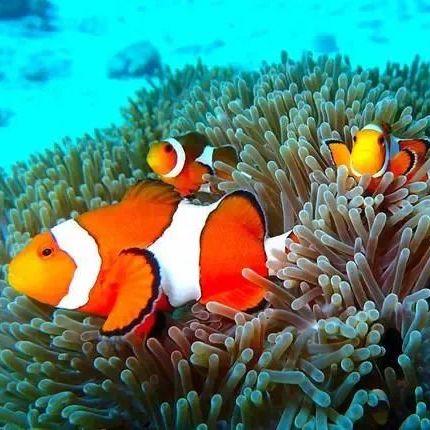 f:id:marinelifelog:20210703212731j:plain