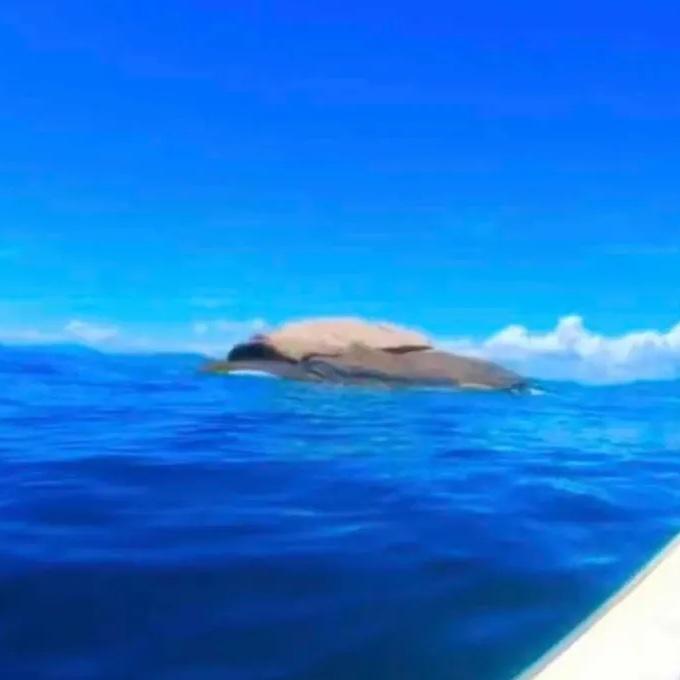 f:id:marinelifelog:20210703212749j:plain