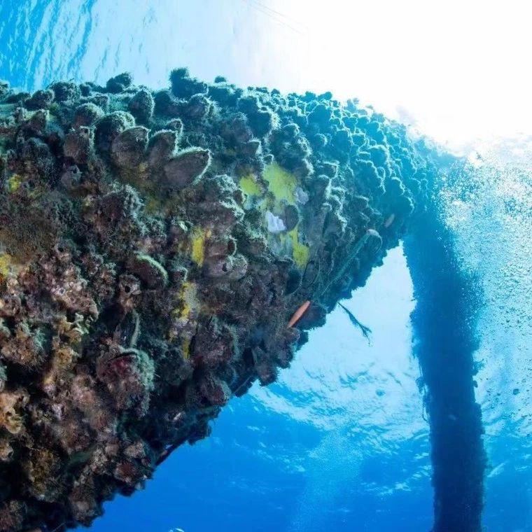 f:id:marinelifelog:20210703214057j:plain