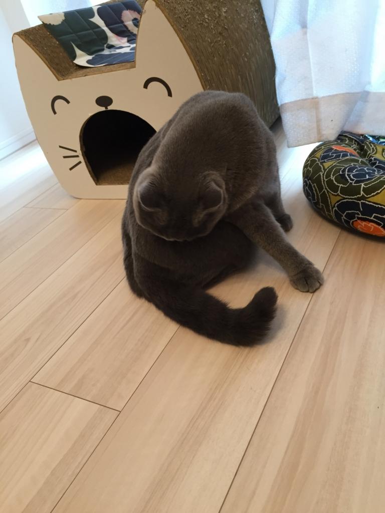 f:id:mariyukiko:20160930154433j:plain