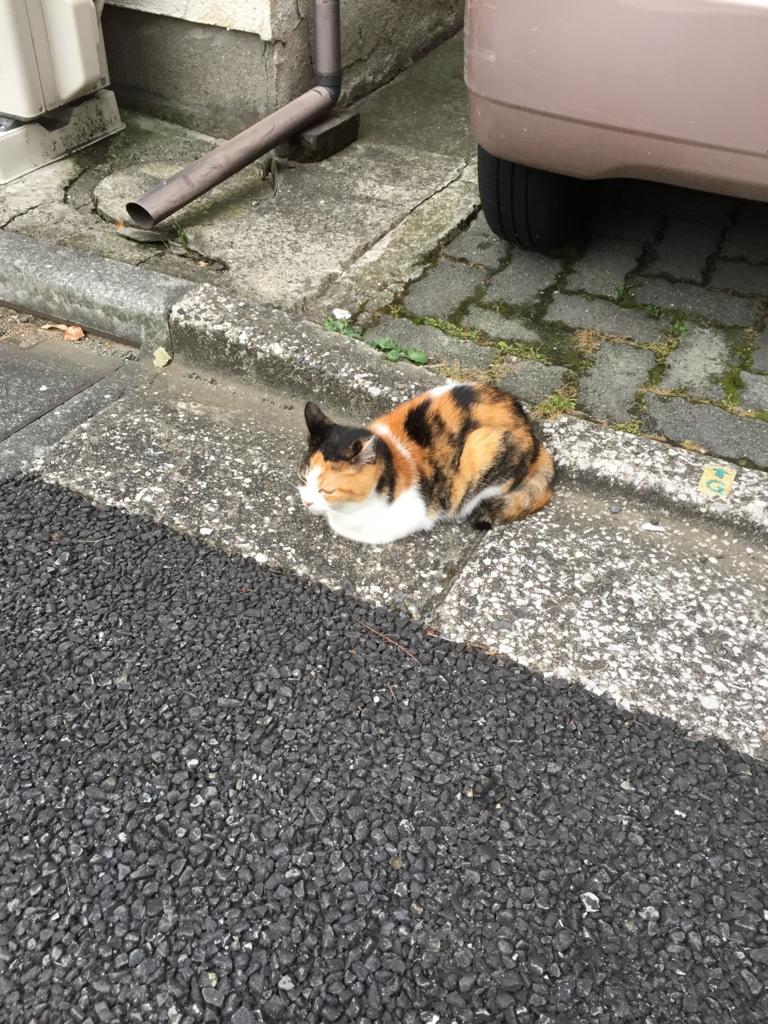 f:id:mariyukiko:20161012012145j:plain