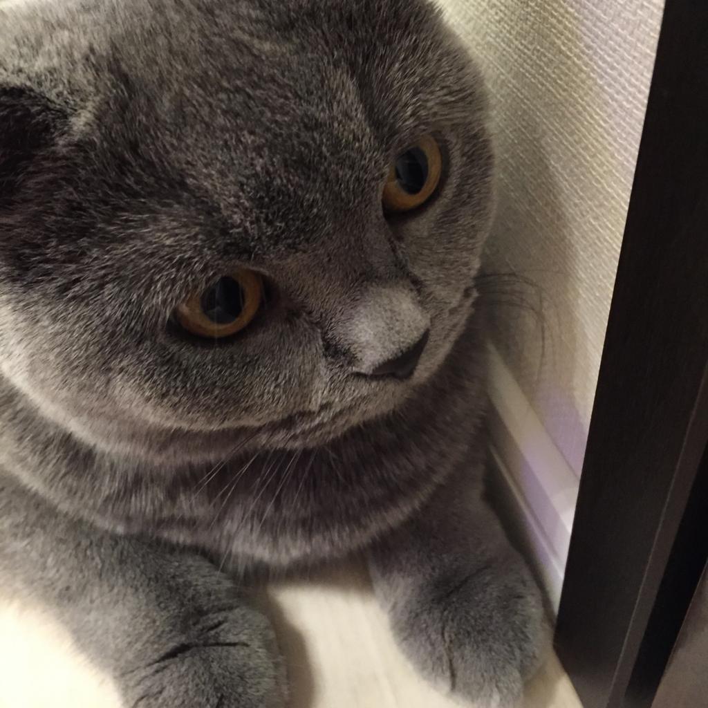 f:id:mariyukiko:20161225234718j:plain