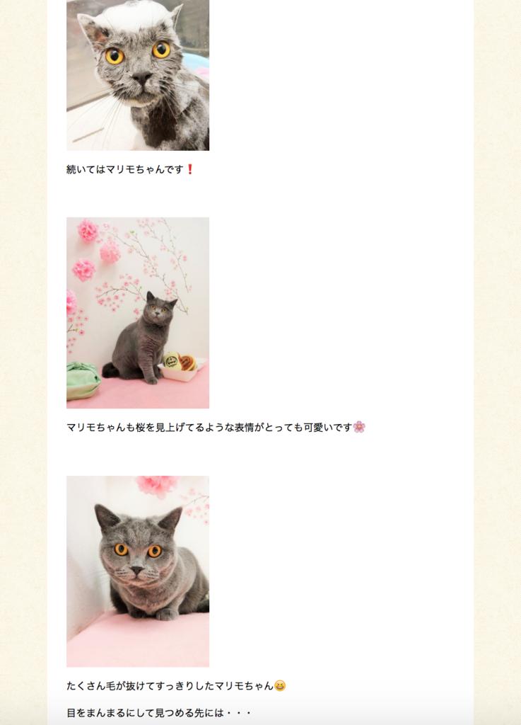 f:id:mariyukiko:20170414005633p:plain