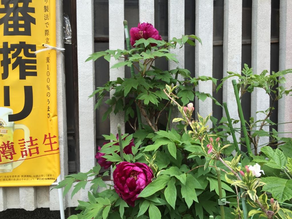 f:id:mariyukiko:20170421143602j:plain