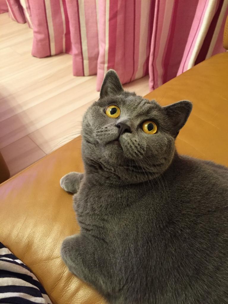 f:id:mariyukiko:20170426132631j:plain