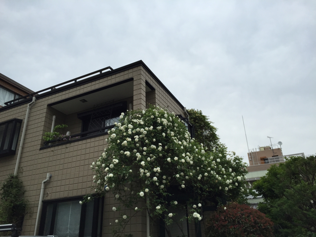 f:id:mariyukiko:20170512172002j:plain