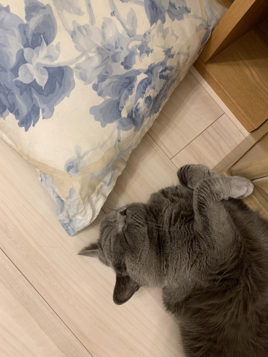 f:id:mariyukiko:20210124225115j:plain