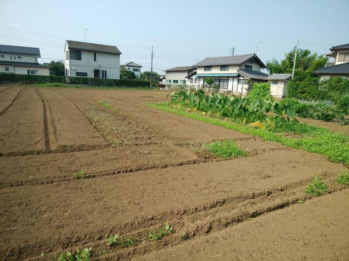 実家の隣の畑