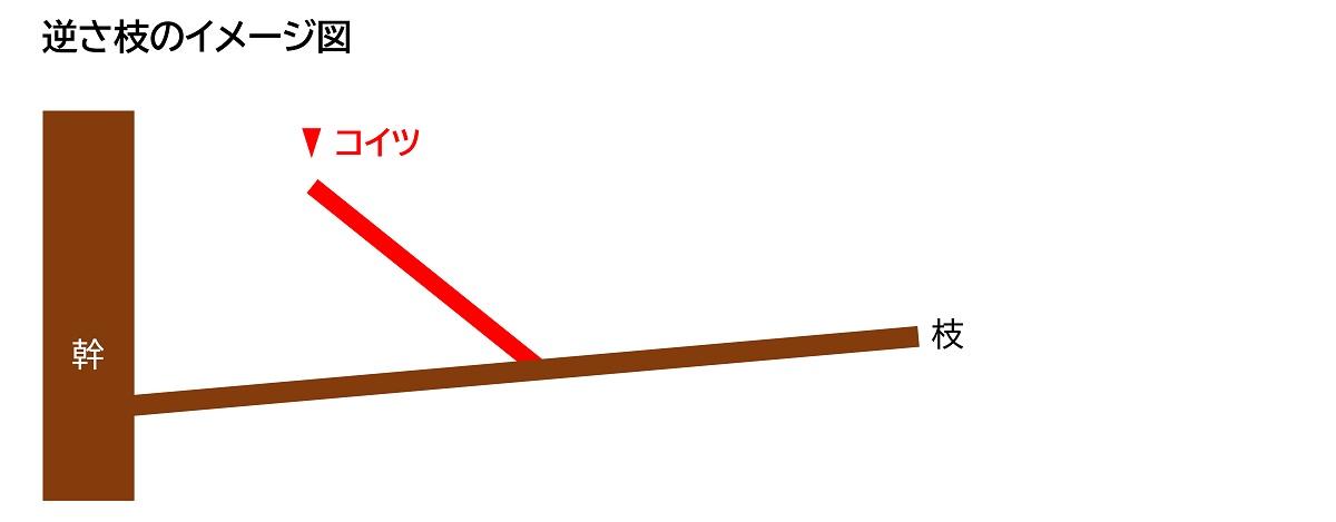 逆さ枝のイメージ図