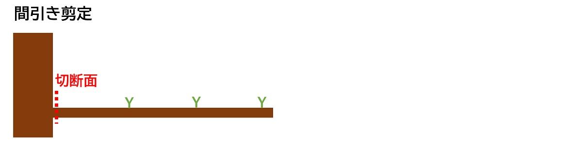 間引き剪定の枝の切り方