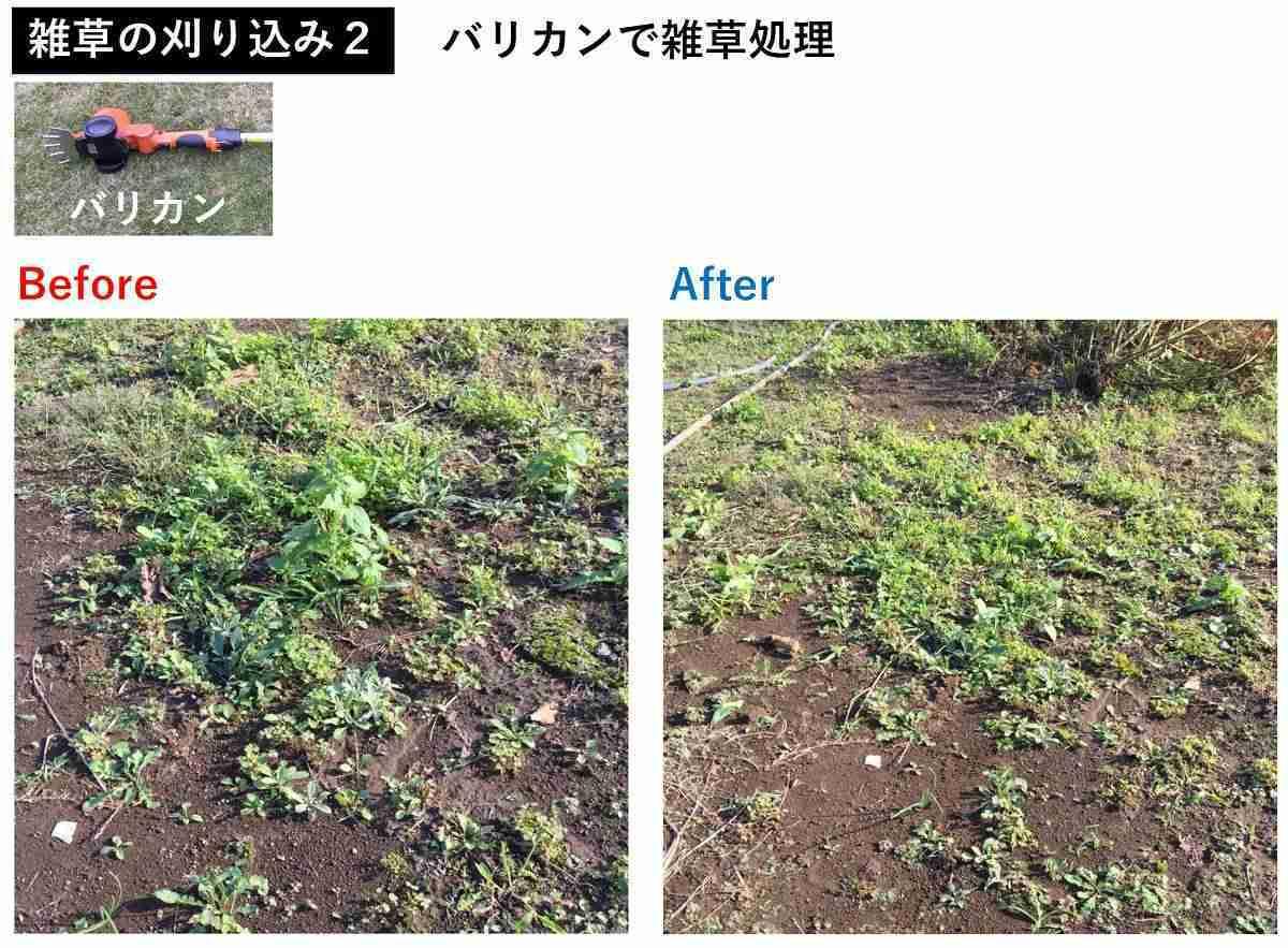 おすすめ電動バリカンの植木の刈り込み事例2