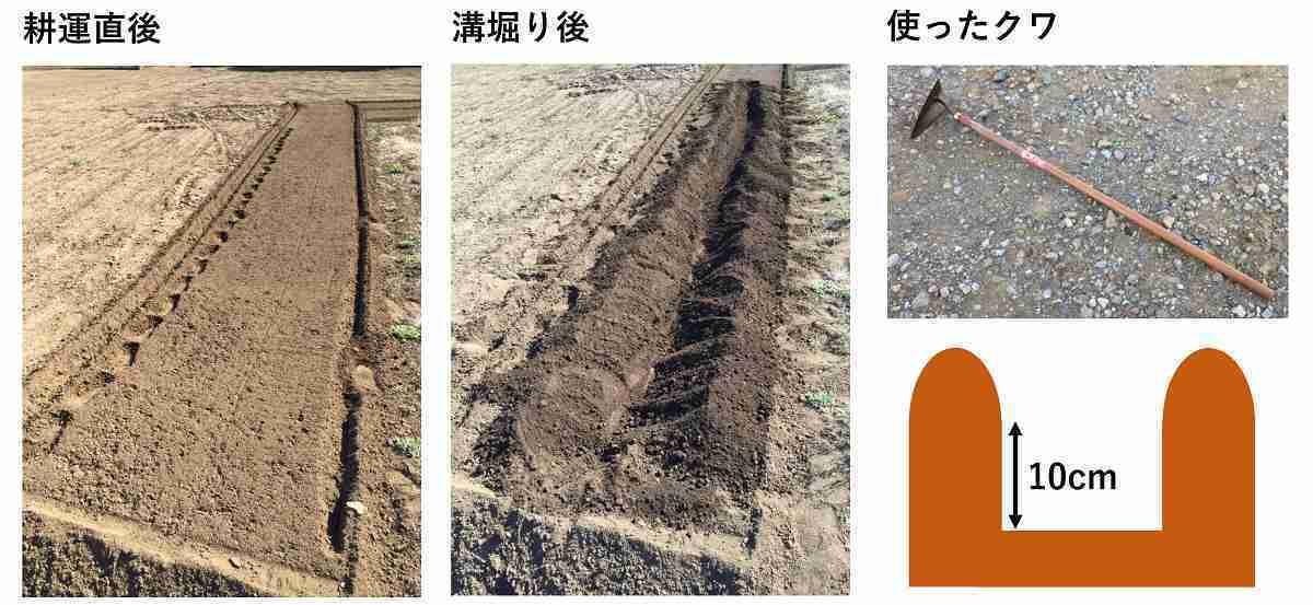 ジャガイモの植え付け用の畝の作り方