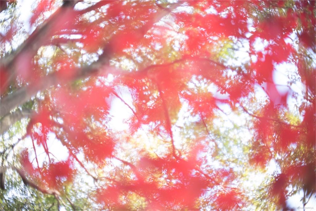 f:id:maronours:20161210111054j:image