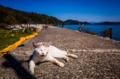 京都新聞写真コンテスト 「沖島で強く生きる猫」