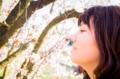 京都新聞写真コンテスト 「春の薫り」