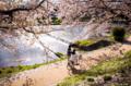 京都新聞写真コンテスト 「祝福」