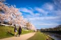 京都新聞写真コンテスト 「春の道程」