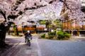 京都新聞写真コンテスト 「便りを届けるために」