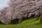 京都新聞写真コンテスト RUNRUN気分で!