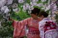 京都新聞写真コンテスト 可憐な競演