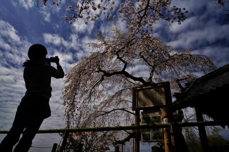 京都新聞写真コンテスト 仰げば愛し