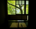 京都新聞写真コンテスト 4月29日 新緑の候