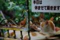 京都新聞写真コンテスト 休暇