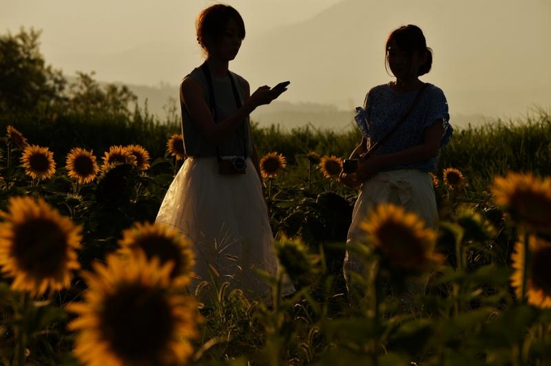 京都新聞写真コンテスト 黄昏色の輪郭