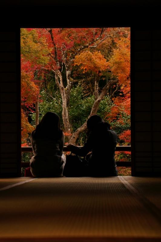 京都新聞写真コンテスト 秋時間