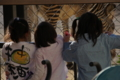 京都新聞写真コンテスト シマウマ談義