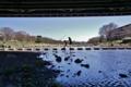 京都新聞写真コンテスト おでかけ日和