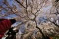 京都新聞写真コンテスト サクラドーム