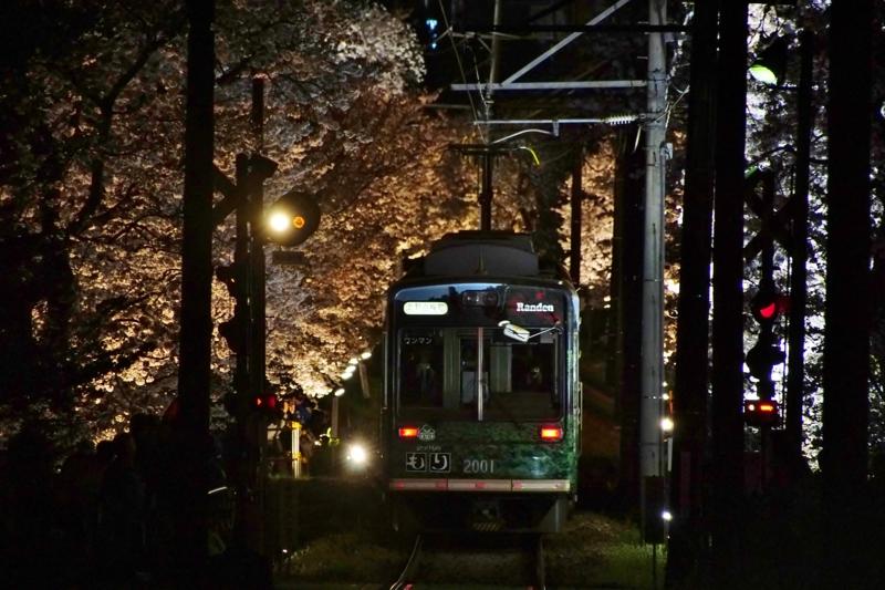 京都新聞写真コンテスト 夜桜電車
