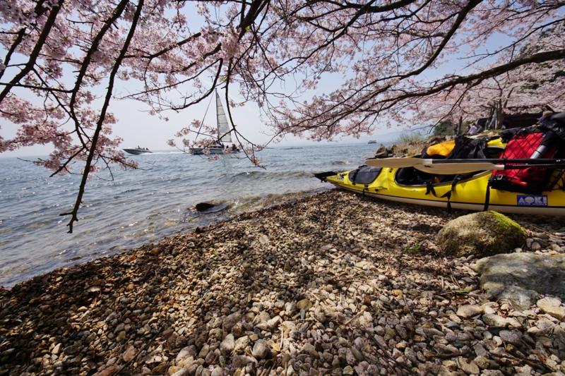 京都新聞写真コンテスト 湖北に春がやってきた